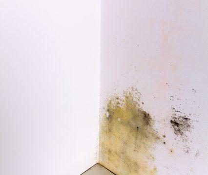 土壁の隅にできた苔と汚れ